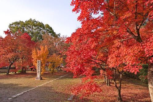 【写真】紅葉 : 清凉寺