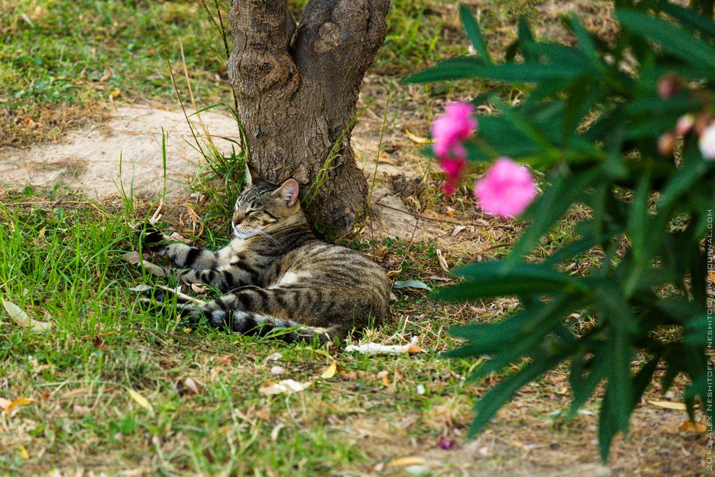 2013-Spain-Benidorm-CatsParadise-004
