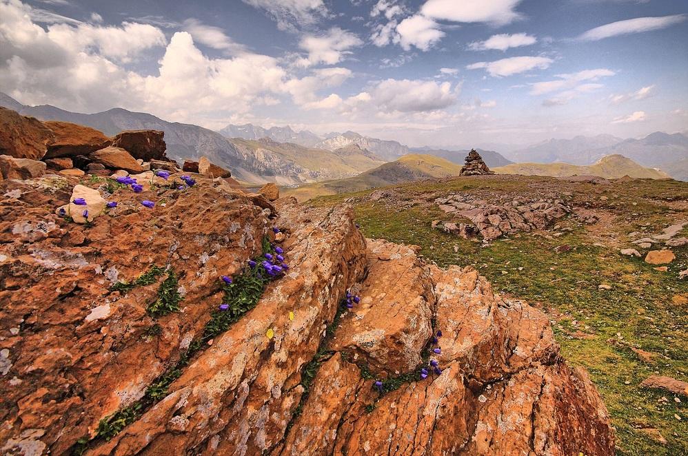 9. Flores en las rocas. Autor, Francisco Antunes