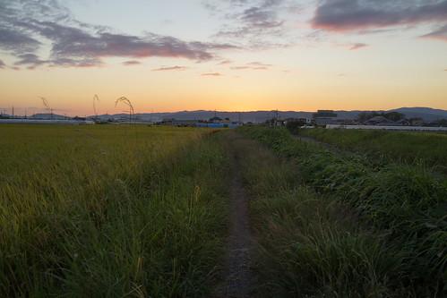 通勤路(草だらけの道)