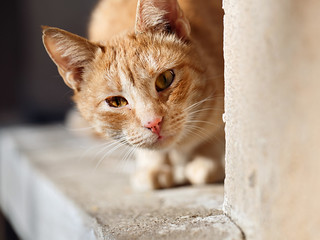 Street cat 95