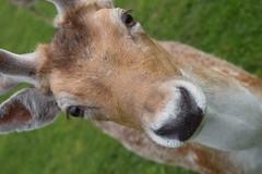 Deer Dear!!