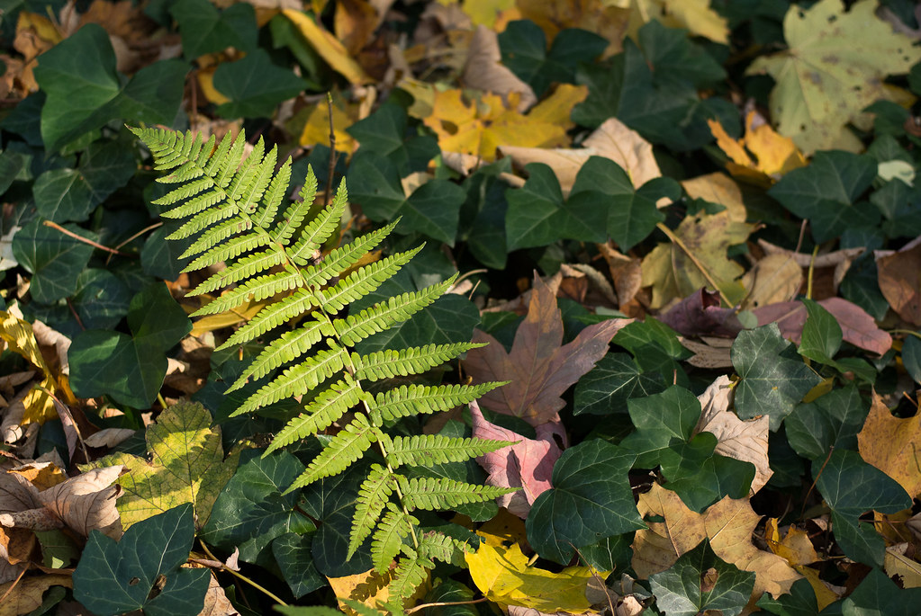 Fern, vines and fallen leaves in the forest