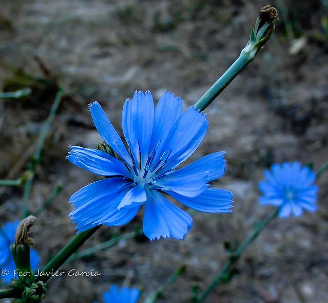 Bellezas naturales, Sony DSC-V3