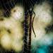 Mid-night Web. by Omygodtom