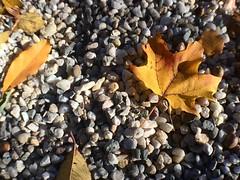 Fall... 🍁🍂🍁🍂🍁 At #sagamorehill #NY home of Theodore Roosevelt 😇 #weekendtrip #NYC #i❤️ny #paththroughhistory #thefrakarsas #mypurpleworld #mamaboetobi #myitchyfeet #alhamdulilah #week