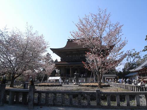 吉野の桜2011@吉野山-30