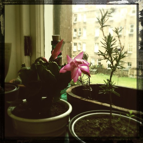 Day 140 of Project 365: Personal Growth