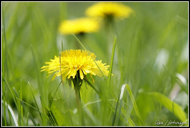 IMAGE: http://farm6.staticflickr.com/5463/7053917159_8bee7c3c14_z.jpg