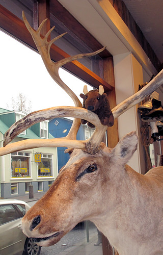 12-04_Ice_4-Buddy-antlers_043_13M