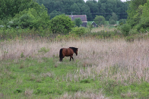 Horse in Boucherville, Qc