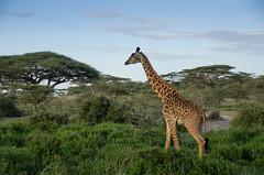 Tanzania-Masek-SafariDrive-52