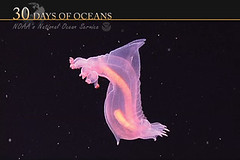 The Deep Ocean