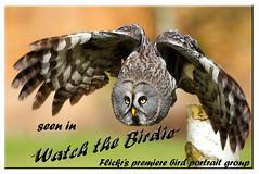 Birdie award