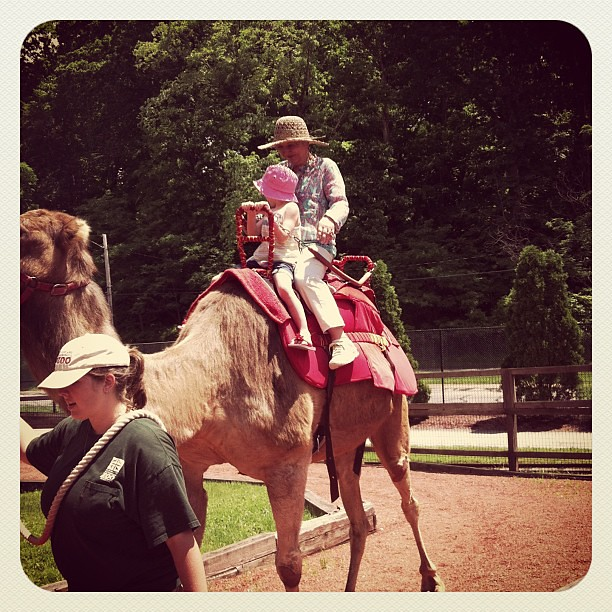 Riding a camel!