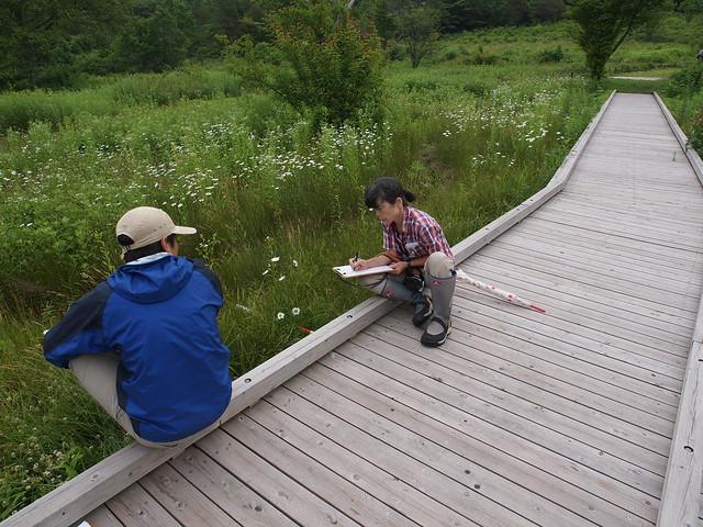 調査地点は木道に沿っているので,木道に座りながら記録ができる.