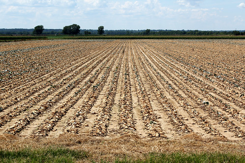 Some regions of the United States seem to experience drought more often and more severely. Farmers in more drought-prone regions are adapting to their higher exposure. Photo Credit: Shutterstock.