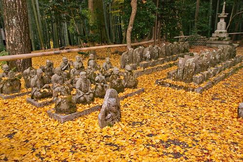 【写真】紅葉 : 赤山禅院