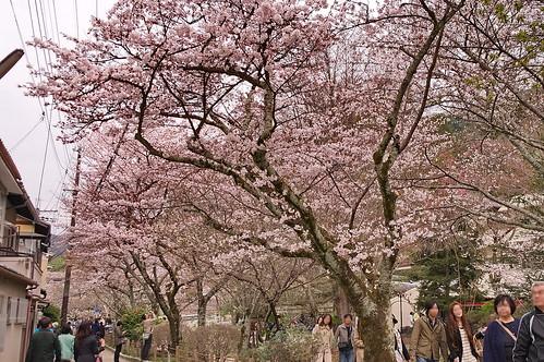【写真】2013 桜 : 哲学の道/2018-12-24/IMGP9225