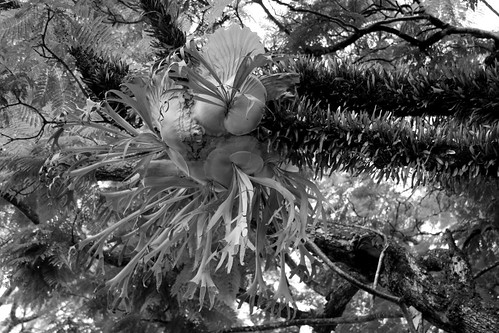 IMG 1937.bw Reaching Out and Hanging On!