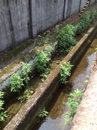 西高校前の水路 by haruhiko_iyota