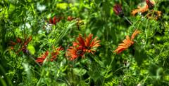 Flower bed, Ashford