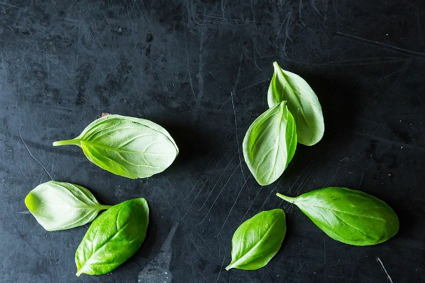 Get Down & Dirty with Basil, from Food52
