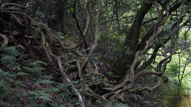 Nature_Road_05