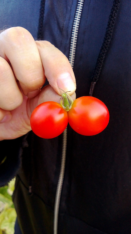 Weekly HarvestWP_20130723_024
