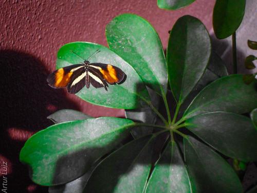 A borboleta e a Floar