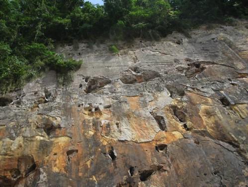 grey parrot nesting cliff