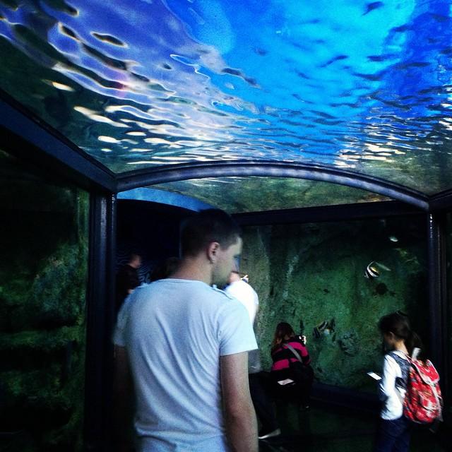 Glass tunnel Sydney aquarium