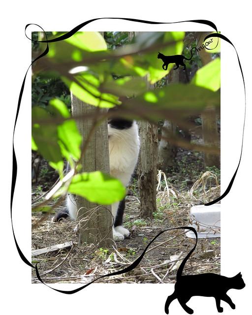 『catzElysium〜石屋の猫2』の画像