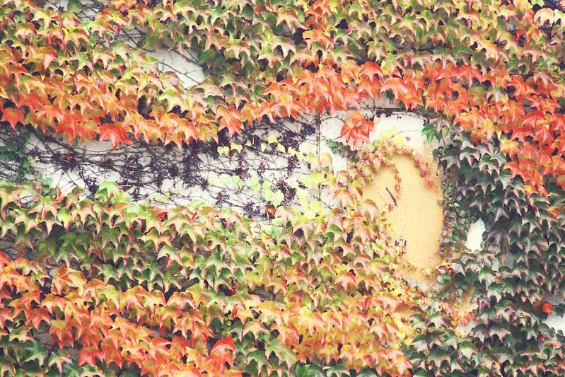 leavessss