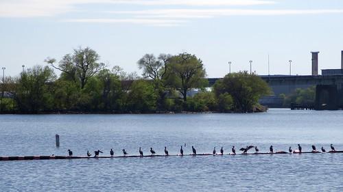 Naval Yard Park: Birds on a Wire