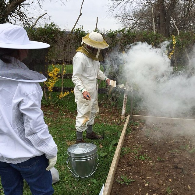Beekeeping from the beginning.