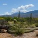 The Fallen Saguaro by Sonora Dick