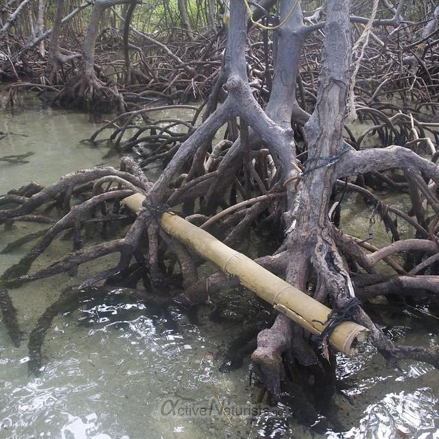 mangroves view 0003 Key Biscayne, Miami, Florida, USA