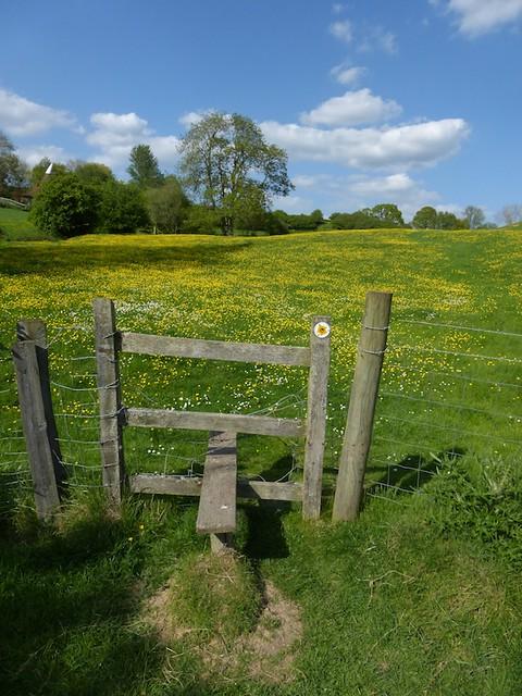 Buttercup stile near Pluckley