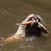 Snacking River Otter by Stuart Borrett