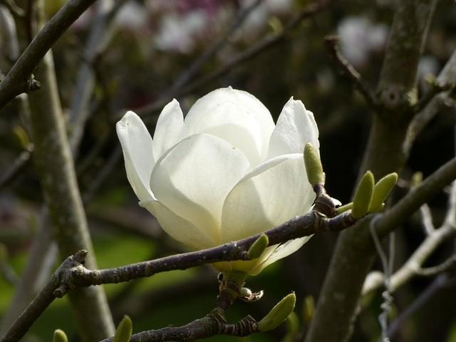 Blüte in der Wilhelma
