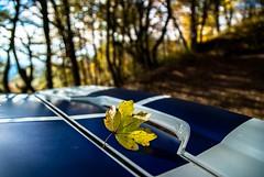 Ford Fiesta ST150 im Herbst