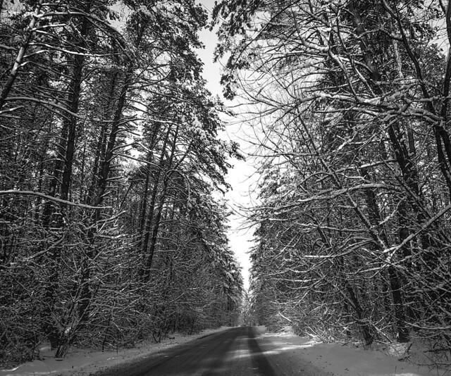 Blackandwhite forest