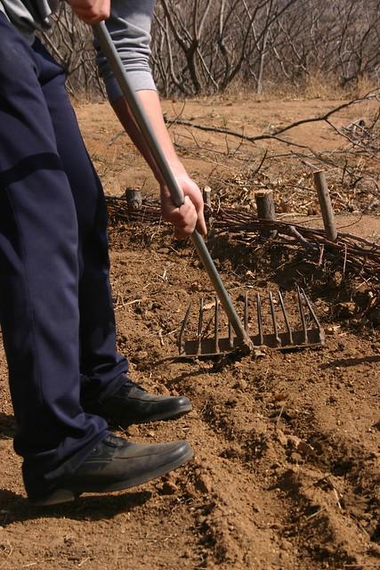 最后用水壶浇水,一棵树就种好了!_乐乐简笔画