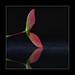 B Leaf by Studio Jaap Verhoeven