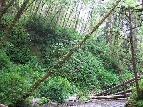 Fern Canyon 3