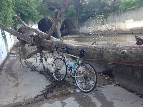 Day 65- Commute - Tree down in Holmes Run Easement