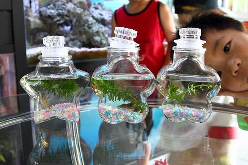 製作生態瓶