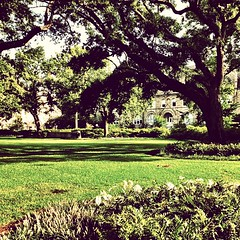 Gibson Hall and the Academic Quad #onlyattulane #onlyinneworleans #tulane