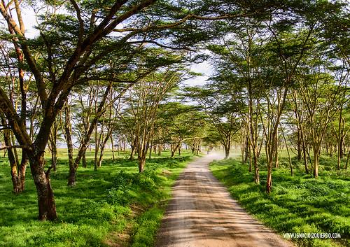 Kenya - Nakuru 09